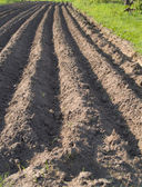 Plowed soil rows background — Stock Photo