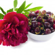 Delicious summer sweet cherry and peony flower — Stock Photo