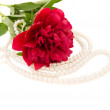 Peony flower with jewels — Stock Photo