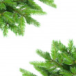 Fir tree branch frame — Stock Photo