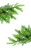 Köknar ağacı dalı çerçeve — Stok fotoğraf