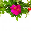 Wild roses border — Stock Photo