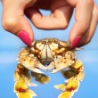 Woman holding crab — Stock Photo #6106090