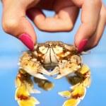 Woman holding crab — Stock Photo #6106090