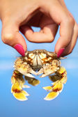 Woman holding crab — Stock Photo
