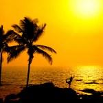 Silhouette of Yoga natarajasana at sunset — Stock Photo #6632820