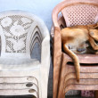 Homeless dog sleeping on the chairs — Stock Photo