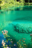 Azure water on Plitvice Lakes — Stockfoto