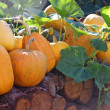Pumpkins - Foto Stock