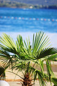 Palm tree — Photo