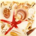 Colorful Sea Shells — Stock Photo