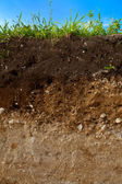 A cut of soil — Stock Photo