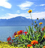 Flowers at Geneva lake. — Stock Photo