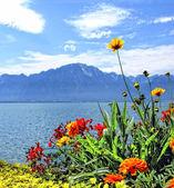 Flowers at Geneva lake. — Stock Photo