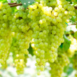 Green grape — Stock Photo #5386283