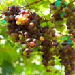Red grape — Stock Photo #5386319