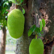 Jackfruits - Stock Photo