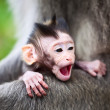 Yawning baby monkey — Stock Photo
