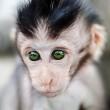 Baby monkey portrait — Stock Photo