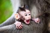Yawning baby monkey — Stock Photo