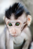 Baby monkey portrait — Stockfoto