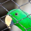 Parrot and Cage - Stock Photo