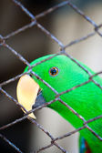 Parrot and Cage — Stock Photo
