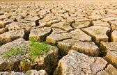 Cracked earth with grass — Stock Photo