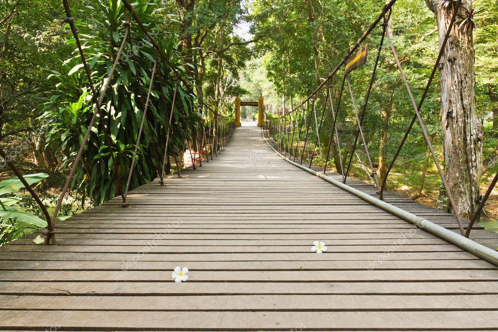 Rope walkway through the treetops in a rain forest  Stock Photo #5999598