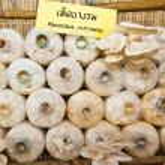 Oyster mushrooms or Pleurotus ostreatus mushrooms — Stock Photo #6351019