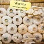 Oyster mushrooms or Pleurotus ostreatus mushrooms — Stock Photo