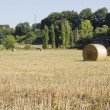 Bales of hay — Stock Photo #6550771