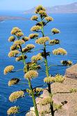 Blick auf die Caldera - Santorin - Griechenland — Stock Photo