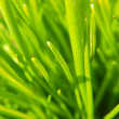 Stock Photo: Close up of green grass
