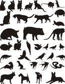 动物宠物 — 图库矢量图片