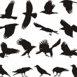 Royalty-Free Stock : Carrion crow