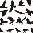 Royalty-Free Stock Vector Image: Carrion crow