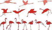Pink flamingo, a set of vectors — Stock Vector