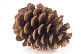 Pine cone isolated on white background — Stock Photo