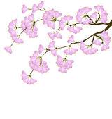 Fiore di ciliegio — Vettoriale Stock