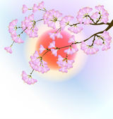 Cherry blossom in spring — Stock Vector