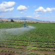 Field irrigation — Stock Photo
