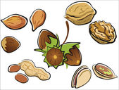 Nuts collection — Stock Vector
