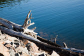 Driftwood on the rocky shore — Stock Photo