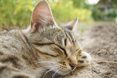 Cat sleeps on the bed — Stock Photo