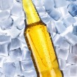 Beer and ice around — Stock Photo