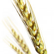 Royalty-Free Stock Photo: Wheat on white