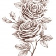 Freehand drawing rose 01 — Stock Photo