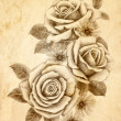 Stock Photo: Freehand drawing rose 02