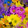Multicolor flowers - Stock Photo